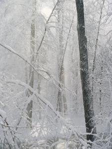 Snow Paints Trees White in the Woods of New York by Vlad Kharitonov