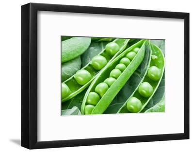 Pods of Green Peas on a Background of Leaves