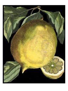 Fragrant Citrus I by Volkamer