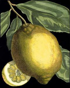 Fragrant Citrus II by Volkamer