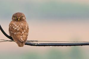 Pretty Little Angry Man by Volkan Donbaloglu