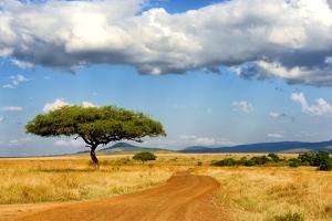 Beautiful Landscape with Tree in Africa by Volodymyr Burdiak