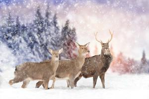 Close Young Deer in Nature. Winter Time by Volodymyr Burdiak