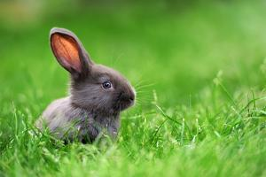 Little Rabbit on Green Grass in Summer Day by Volodymyr Burdiak