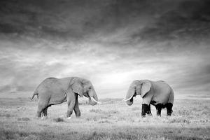 Two Elephant in the Wild - National Park Kenya by Volodymyr Burdiak