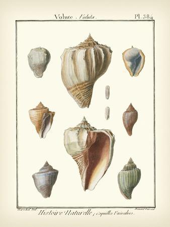https://imgc.artprintimages.com/img/print/volute-shells-pl-384_u-l-p8lknh0.jpg?p=0