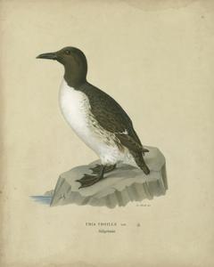 Antique Penguin II by Von Wright