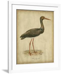 Vintage Heron I by Von Wright