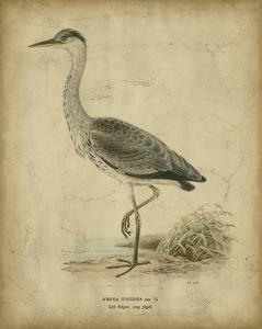 Vintage Heron II by Von Wright