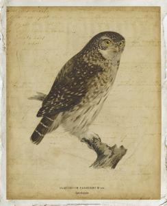 Vintage Owl by Von Wright
