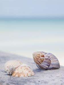 Usa, Florida, St. Petersburg, Focus on Seashell on Beach by Vstock LLC