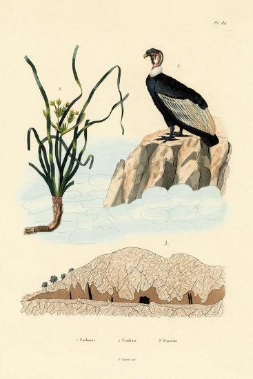 Vulture, 1833-39--Giclee Print
