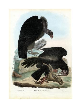 https://imgc.artprintimages.com/img/print/vultures-1863-79_u-l-puri4p0.jpg?p=0