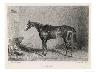 Portrait of the Racehorse Harkaway Who Won the 1838 Goodwood Cup in His Stable