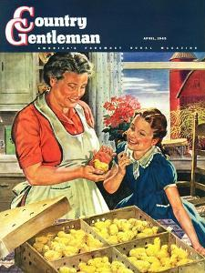 """""""Crate of New Baby Chicks,"""" Country Gentleman Cover, April 1, 1945 by W.C. Griffith"""