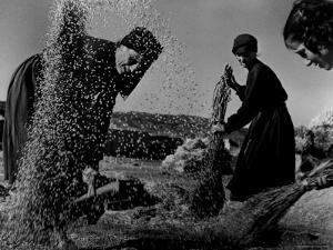 Grain Flying in Air During Winnowing by Women in Famous Spanish Village by W. Eugene Smith
