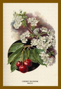 Cherry Blossom Fruit by W.h.j. Boot