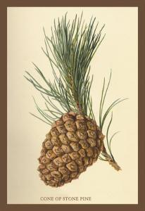 Cone of a Stone Pine by W.h.j. Boot