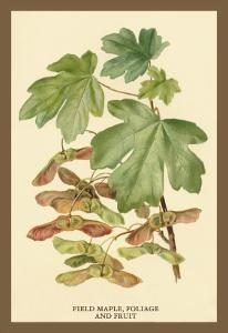 Field Maple, Foliage, and Fruit by W.h.j. Boot