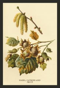 Hazel, Catkins and Fruit by W.h.j. Boot