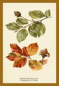 The Beech Leaves and Nut by W.h.j. Boot