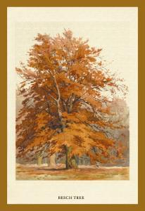 The Beech Tree by W.h.j. Boot