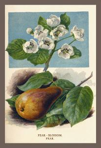 The Pear-Blossom Pear by W.h.j. Boot