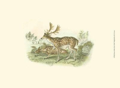 Petite Fallow Deer