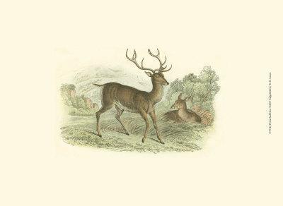 Petite Red Deer