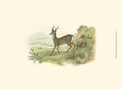 Petite Row Deer