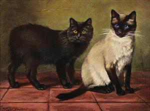Manx and Siamese Cats by W. Luker