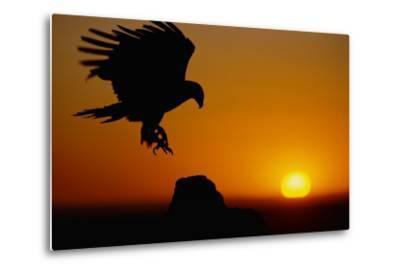 Golden Eagle at Sunset
