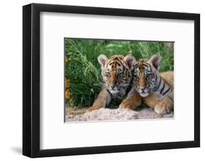 Two Siberian Tiger Cubs by W^ Perry Conway