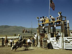 Cowboy Rides a Bucking Bull at a Rodeo by W. Robert Moore