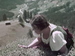 Woman Crawls to the Edge of a Cliff to Pick Edelweiss Flowers by W. Robert Moore