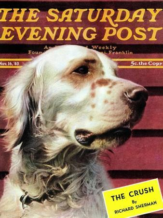 """Springer Spaniel,"" Saturday Evening Post Cover, November 16, 1940"