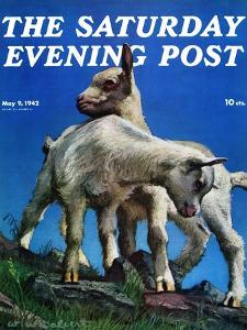 """Two Kid Goats,"" Saturday Evening Post Cover, May 9, 1942 by W.W. Calvert"