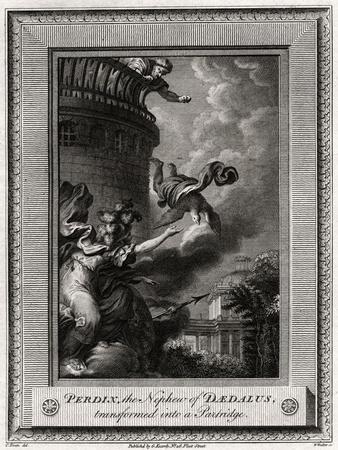 Perdix, the Nephew of Daedalus, Transformed into a Partridge, 1774