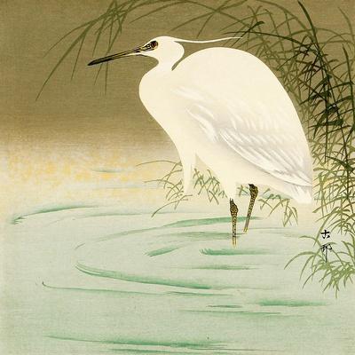 https://imgc.artprintimages.com/img/print/wading-egret_u-l-pnab2c0.jpg?p=0
