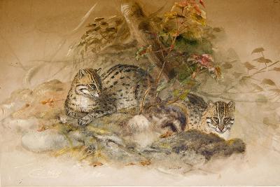 Wagati Cat, 1851-69-Joseph Wolf-Giclee Print