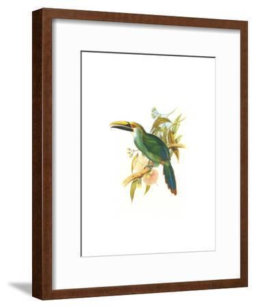 Wagler's Toucanet-John Gould-Framed Art Print