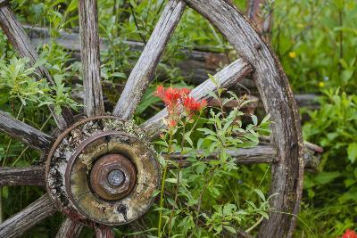 Wagon Wheel in Old Gold Town Barkersville, British Columbia, Canada-Michael DeFreitas-Photographic Print