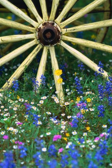 Wagon Wheel Sitting Among Wildflowers-Darrell Gulin-Photographic Print