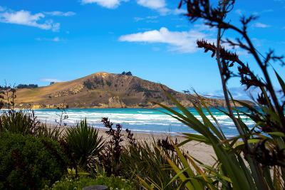 Waikouaiti Reserve, Otago, South Island, New Zealand, Pacific-Suzan Moore-Photographic Print
