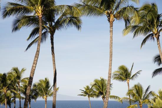 Wailea Beach Marriott Resort And Spa, Maui, Hawaii, USA: Palm Trees At The Resort-Axel Brunst-Photographic Print
