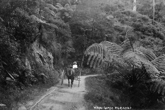 Waipu Gorge--Photographic Print