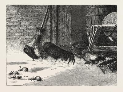 Waiting for a Break. 1876, Chicken, Chickens, Bird, Birds, Fowl, Fowls--Giclee Print