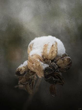 https://imgc.artprintimages.com/img/print/waiting-on-spring_u-l-pu0om60.jpg?p=0