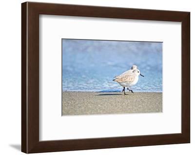 Walk Along The Coast-Bruce Nawrocke-Framed Photographic Print