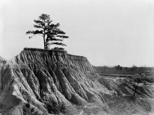 Mississippi: Erosion, 1936 by Walker Evans